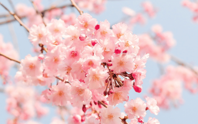 Get Ready for Spring with These Great Home Improvements